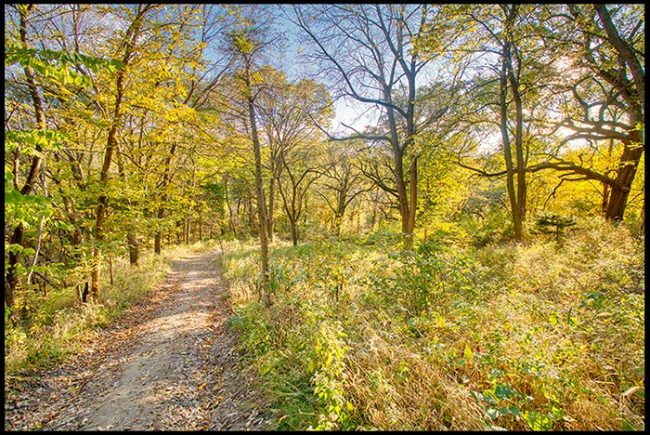 The trail through autumn colored leaves under a blue sky Fontenelle, Nebraska. Nature shells there is meaning to life
