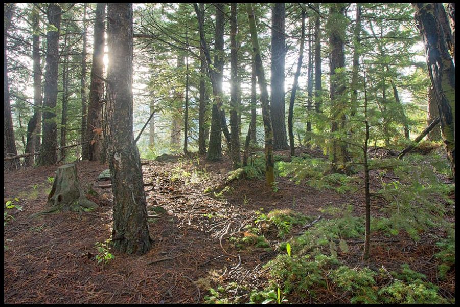 A sun beam shines through trees and makes a path in the Roosevelt National Forest, Colorado and Psalm 119:105-106. Bible verse light unto my path