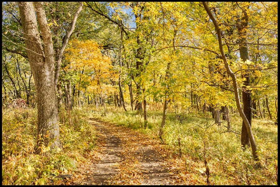 A path through yellow fall trees in Fontenelle Forest, Bellevue, Nebraska.