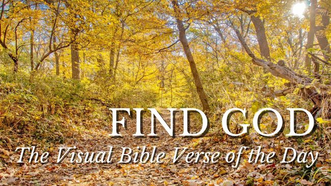 Find God path through a fall forest at Fontenelle Forest, Nebraska
